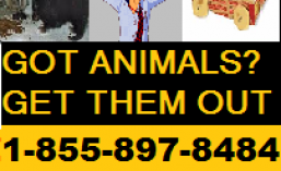 cropped-1-855-897-8484-got-animals-get-them-out-now-ontario-canada.png