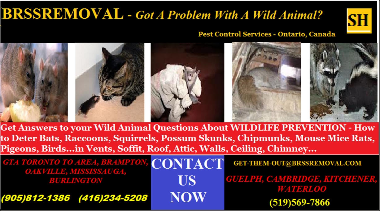BRSSREMOVAL - GET THEM OUT - 416-234-5208  -  905-812-1386  -  519-569-7866  -  GOT A PROBLEM WITH A WILD ANIMAL  -  ONTARIO CANADA
