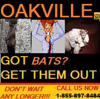 Got Bats #GetThemOut  with @AnimalsGetOut  1-855-897-8484