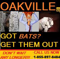Got Bats #GetThemOut  with @AnimalsGetOut  1-855-897-8484