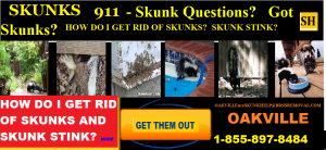 If you are having skunk problems in Ontario Canada then call  1-855-897-8484