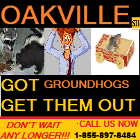1-855-897-8484 GROUND HOGS - GROUND HOG REMOVAL  GET RID OF GROUND HOGS NOW