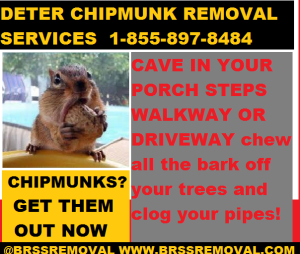 CHIPMUNKS - 1-855-897-8484 CHIPMUNKS CAVE IN YOUR PORCH STEPS WALKWAY DRIVEWAY
