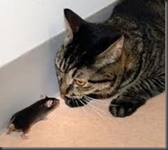 1-855-897-8484  MOUSE - CAT - WHAT HAPPENS WHEN YOUR CAT CORNERS A MOUSE CARRYING THE HANTA VIRUS GET THEM OUT NOW 1-855-897-8484