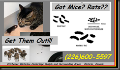 RATS Go TO-WATER-ANY-WATER-WILL-DO-GET-THEM-OUT-NOW-1-855-897-8484- Kitchener Ontario Canada