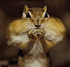 OOOOOOOOOOOoooooooooooooooh THEEEEEEEY HAVE NUTS!!!!!!!